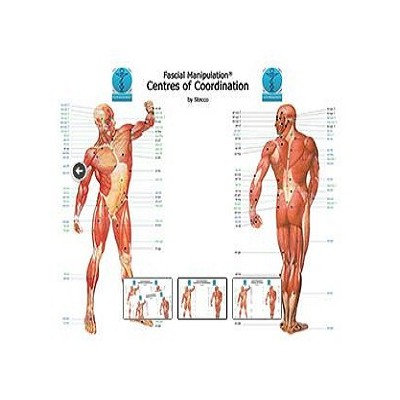Fascial manipulation - Centers of coordination - Poster