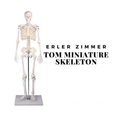 """Σκελετός μινιατούρα """"Τομ"""""""