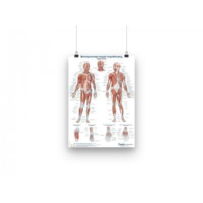 Trigger points poster - GR/EN - 50x70cm