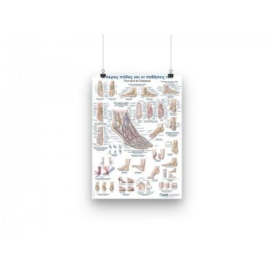 Αφίσα - Η ανατομία ποδιού - GR/EN - 50x70cm