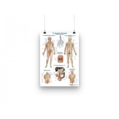 Αφίσα - Το λεμφικό σύστημα - GR/EN - 50x70cm