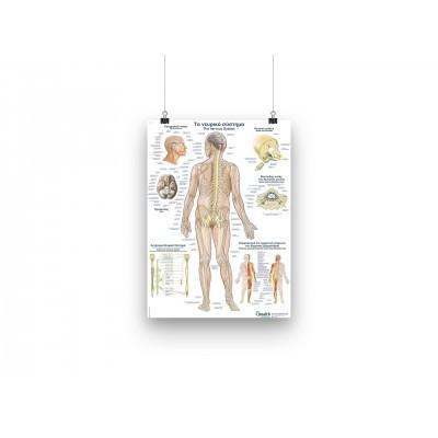Αφίσα - Το νευρικό σύστημα - GR/EN - 50x70cm
