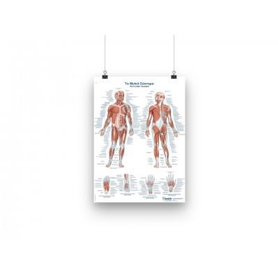 Αφίσα - Το Μυικό Σύστημα - GR/EN - 50x70cm