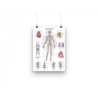 Αφίσα ανατομίας - Το κυκλοφορικό σύστημα - EN/DE - 50X70cm