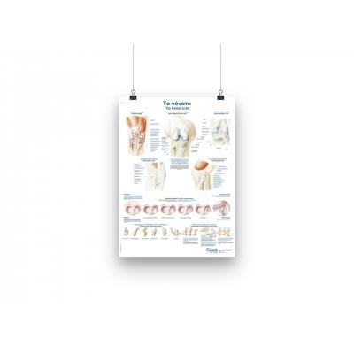 Αφίσα | Ανατομία Γονάτου - GR/EN - 50x70cm