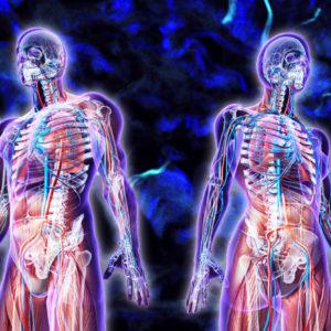 Interstitium : Οι επιστήμονες ανακάλυψαν τελικά ένα νέο όργανο;
