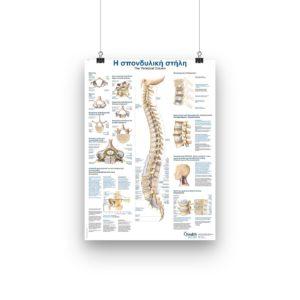 σπονδυλική στήλη αφίσα