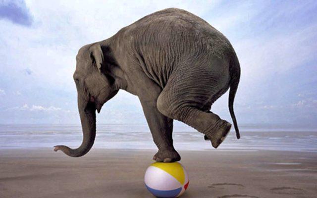 Τα 7 σημαντικότερα εργαλεία εξάσκησης ισορροπίας και ιδιοδεκτικότητας