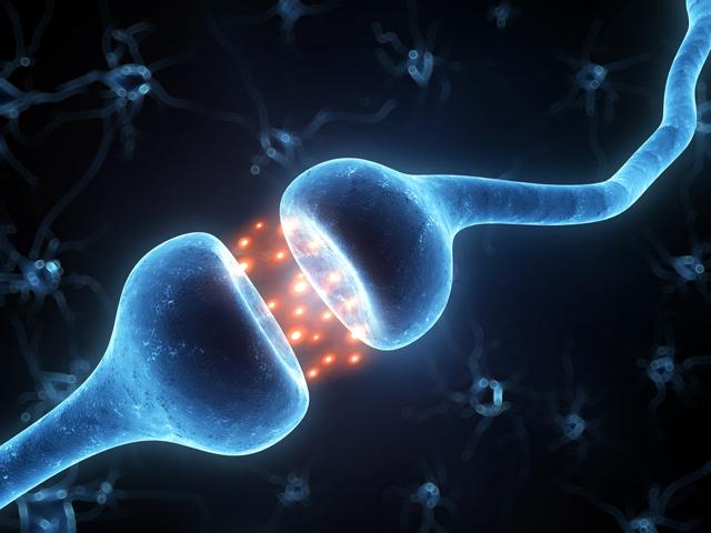 brain-plasticity.jpg